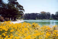 Spreckles Lake    copyright 2000 Marilyn Straka